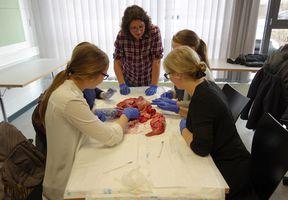 Anatomie in Theorie und Praxis.